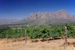 Ajardine a imagem de um vinhedo, Stellenbosch, África do Sul. Imagens de Stock