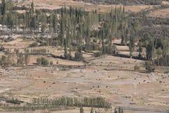 Ajardine a imagem de vacas, de iaques e da árvore selvagens em Leh Imagens de Stock Royalty Free