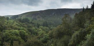 Ajardine a imagem do panorama da floresta verde luxúria no verão com MOU Imagens de Stock