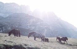 Ajardine Itália, dolomites - em cavalos do nascer do sol paste nas rochas estéreis Imagens de Stock