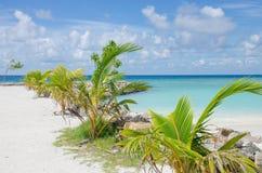 Ajardine la costa del Océano Índico en Maldivas imagen de archivo libre de regalías