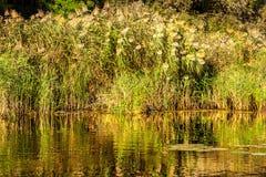 Ajardine la imagen de los árboles arundineos y viejos de un pequeño río Imágenes de archivo libres de regalías
