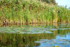 Ajardine la imagen de los árboles arundineos y viejos de un pequeño río Imagenes de archivo