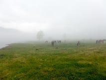 Ajardine la opinión del panorama del campo en la montaña en niebla Fotos de archivo libres de regalías