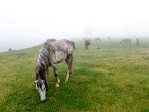 Ajardine la opinión del panorama del campo en la montaña en niebla Fotografía de archivo