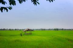 Ajardine la visión sobre campos de oro del arroz y cabina vieja de la cabaña imagenes de archivo