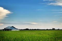 Ajardine la vista de los campos de arroz, de la casa y del cielo azul dramático fotografía de archivo libre de regalías
