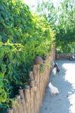 Ajardine las jarras de las jarras de la arcilla del diseño en una cerca de madera tejida Fotos de archivo libres de regalías