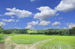 Ajardine a montanha e coloque o arroz um a estação da chuva no país Foto de Stock