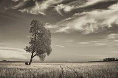 Ajardine mostrar a árvore no prado no dia de verão ensolarado Imagem de Stock Royalty Free