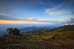 Ajardine, muitas couves verdes nos campos da agricultura em Phuta Foto de Stock