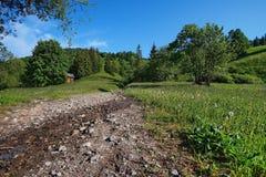 Ajardine na floresta com pouco cabine 6 do log Fotos de Stock Royalty Free