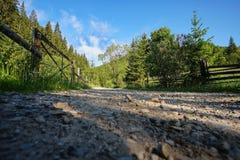 Ajardine na floresta com pouco cabine 6 do log Fotos de Stock