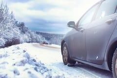 Ajardine na floresta do inverno com região selvagem coberto de neve Foto de Stock