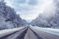 Ajardine na floresta do inverno com região selvagem coberto de neve Fotografia de Stock