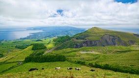 Ajardine na ilha de Miguel do Sao, Açores, Portugal Imagens de Stock