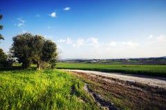 Ajardine na natureza do céu com nebuloso e da estrada através de uma estrada de floresta sempre-verde que passa a montanha Imagem de Stock Royalty Free