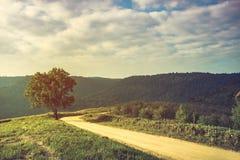 Ajardine na natureza do céu com nebuloso e da estrada com as frentes Foto de Stock