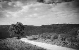 Ajardine na natureza do céu e nebuloso com a estrada com as frentes Imagens de Stock Royalty Free