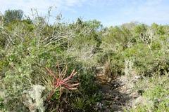 Ajardine na vegetação perto de um cenote em Giron Fotografia de Stock