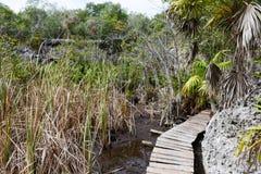 Ajardine na vegetação perto de um cenote em Giron Fotografia de Stock Royalty Free