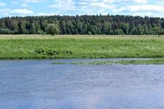 Ajardine nas costas do rio, campo com grama verde Imagem de Stock