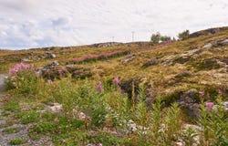 Ajardine nas ilhas pequenas, Noruega, com as flores cor-de-rosa da azaléia na parte dianteira Fotos de Stock Royalty Free