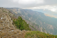 Ajardine nas montanhas da borda nuvens e névoa Foto de Stock Royalty Free