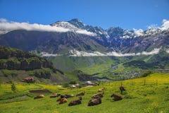Ajardine nas montanhas de Cáucaso, região de Kazbegi, Geórgia Fotografia de Stock