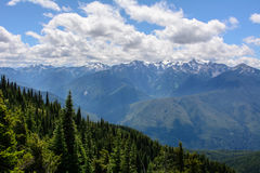 Ajardine nas montanhas, parque nacional olímpico, Washington Foto de Stock Royalty Free