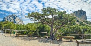 Ajardine no bosque do zimbro com as montanhas de Sokol e de Koba-Kaya Foto de Stock Royalty Free