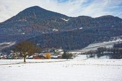 Ajardine no campo em Suíça coberto de neve no inverno Foto de Stock Royalty Free