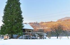 Ajardine no campo nevado em Suíça no inverno Foto de Stock