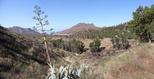 Ajardine no console de Tenerife Imagens de Stock