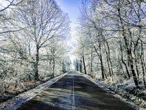Ajardine no dia nebuloso do inverno de campos cobertos de neve e de florestas Fotos de Stock Royalty Free