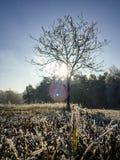 Ajardine no dia nebuloso do inverno de campos cobertos de neve e de florestas Foto de Stock Royalty Free