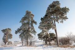 Ajardine no inverno com árvores e neve congeladas Imagens de Stock