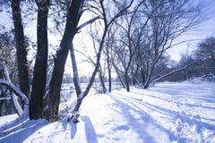Ajardine no inverno com as árvores na neve Imagens de Stock