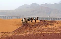 Ajardine no noroeste província de China, Ningxia Foto de Stock Royalty Free