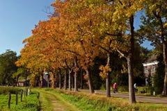Ajardine no outono de uma estrada com árvores Fotos de Stock Royalty Free