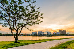 Ajardine no parque da cidade com o lago no fundo do por do sol Imagem de Stock Royalty Free