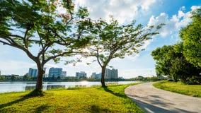 Ajardine no parque da cidade com o lago no fundo do por do sol Fotografia de Stock