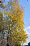 Ajardine no parque da cidade no dia ensolarado do outono Imagens de Stock