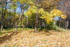 Ajardine no parque da cidade no dia ensolarado do outono Fotografia de Stock