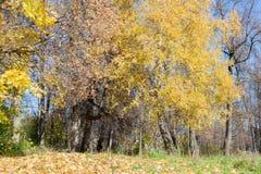 Ajardine no parque da cidade no dia ensolarado do outono Imagem de Stock Royalty Free
