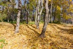 Ajardine no parque da cidade no dia ensolarado do outono Imagem de Stock