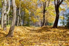 Ajardine no parque da cidade no dia ensolarado do outono Fotos de Stock