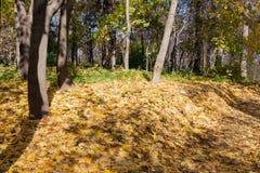 Ajardine no parque da cidade no dia ensolarado do outono Fotografia de Stock Royalty Free