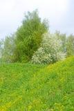 Ajardine no parque na fortaleza de Lappeenranta, Foto de Stock Royalty Free