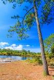 Ajardine no parque nacional de Phu Kradung, Tailândia Fotografia de Stock Royalty Free
